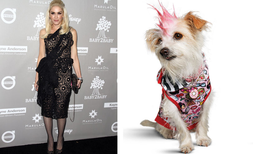 1-gwen-stefani-pet-clothing-line
